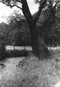 S1. La Vallée de la Lasne concours photo 1970 © SI Rixensart.jpg
