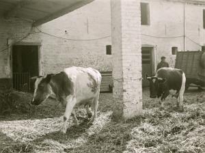 rixensart,ferme de froidmont,animaux de ferme,fermes,froidmont