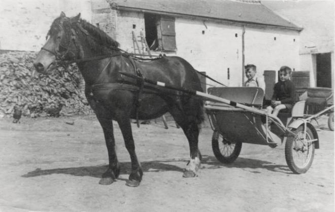 864. Ferme de Froidmont (Urbain et Richard Meert) cheval Mira c Josiane Meert.jpg
