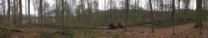 rixensart,bois de rixensart,les six hêtres,arbres remarquables
