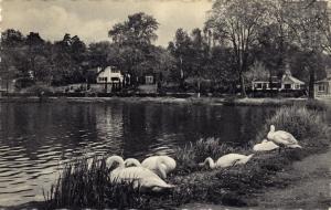 Un coin du lac (Lac de Genval) 1966 c Anne-Marie Delvaux.jpg