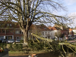 1327B. Le Marronnier Place communale 18.11.2015 touché par une tempête © Guy Van Roy.jpg