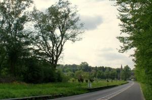 rosières,rue de bierges,arbres remarquables