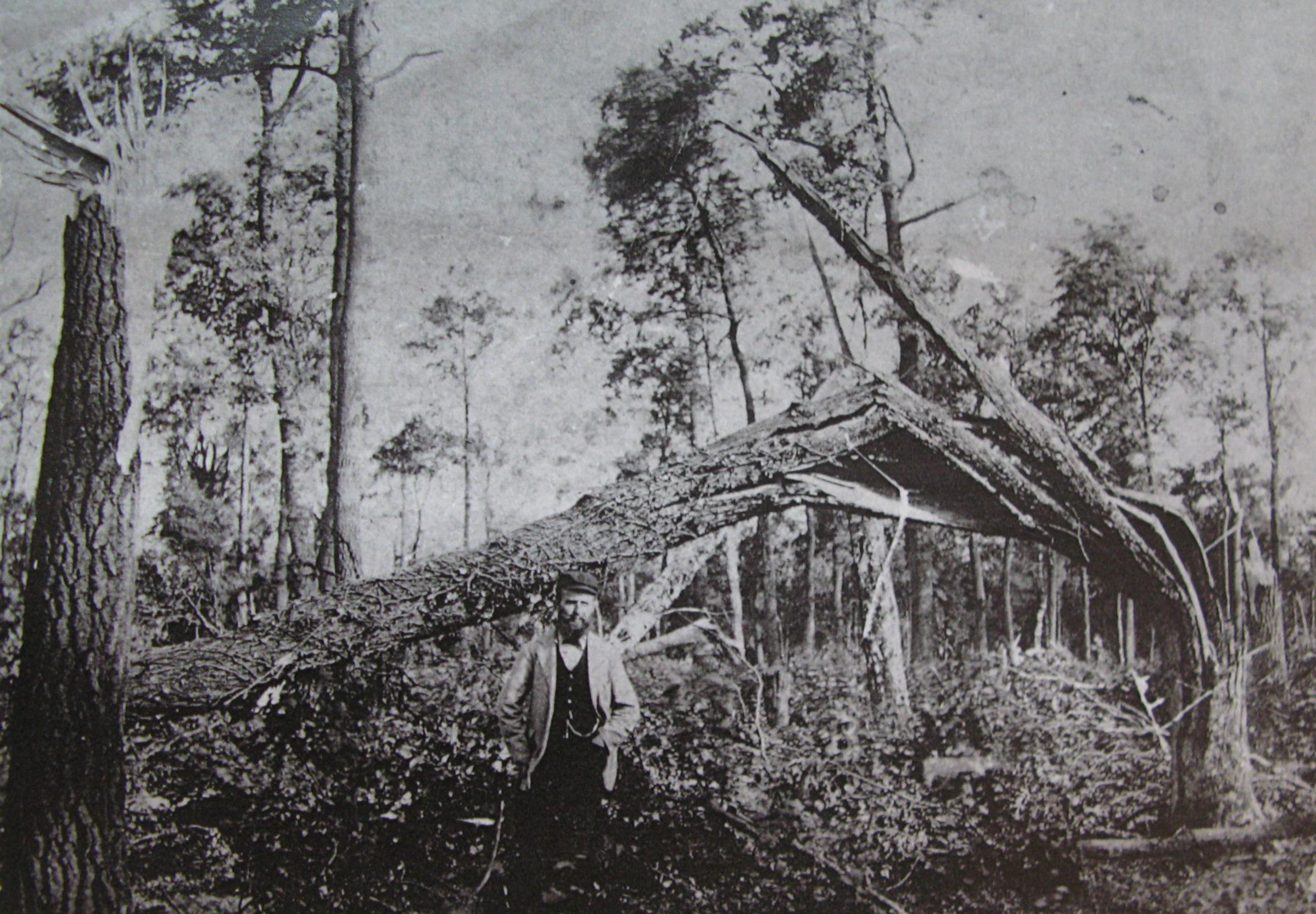 Cyclone de 1895 Bois La Haut Collection Cercle d'Histoire de Rixensart