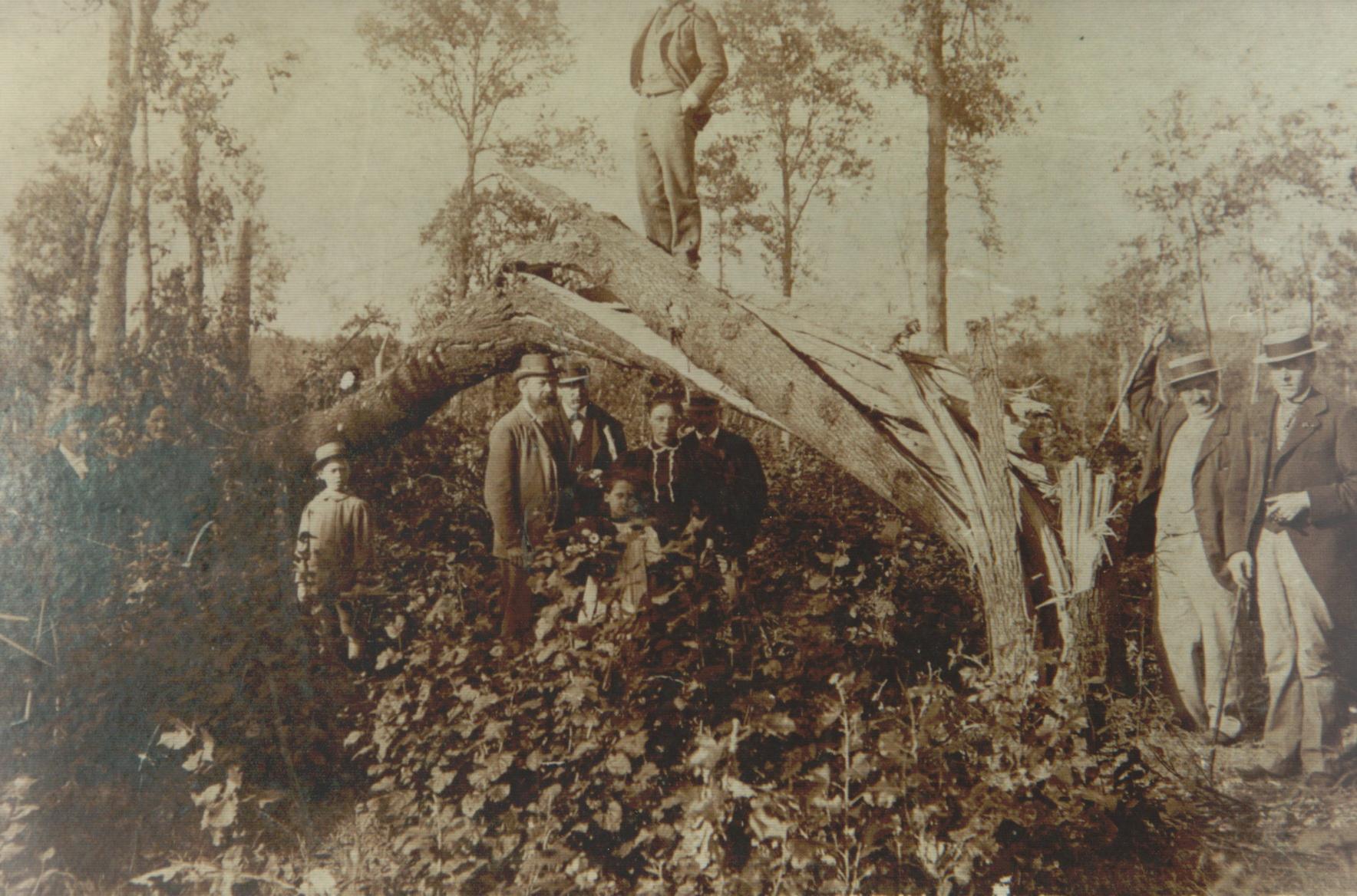 Cyclone de 1895 à Froidmont Collection Cercle d'Histoire de Rixensart