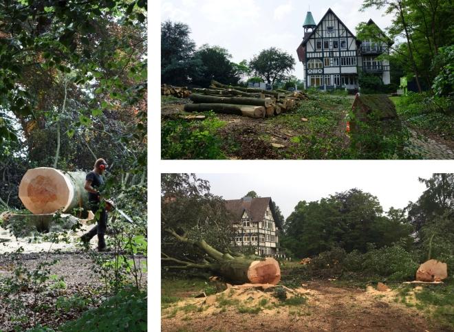 Parc du Normandy abattage de 467 arbres montage (1)
