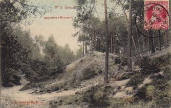1911 Sapinières à Bourgeois c Anne-Marie Delvaux