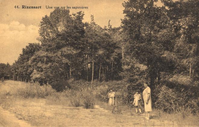 190130 une vue sur les sapinières 1931-1933 c jcr bou